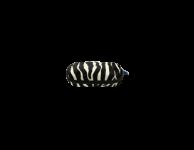 Kinder brillenkoker zebra